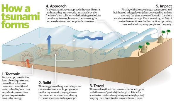 How Do Tsunamis Form