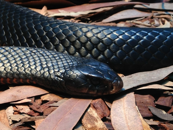 black snake on the ground